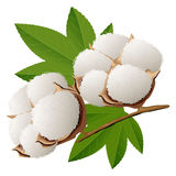 Realistic cotton branch Stock Photo