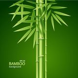 Realistic 3d Detailed Bamboo Shoots Background Card. Vector Royalty Free Stock Image