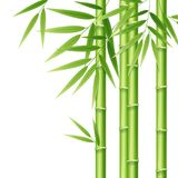 Realistic 3d Detailed Bamboo Shoots. Vector. Realistic 3d Detailed Bamboo Shoots Japanese or Chinese Growth Tree Isolated on White Background for Poster. Vector Royalty Free Stock Photos