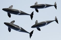 3D Render of Killer Whale Royalty Free Stock Photos