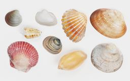 3D Render of Seashells Royalty Free Stock Photography