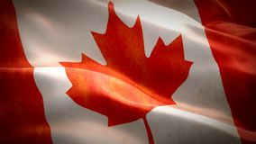 Realistic 3d seamless looping Canada flag waving in the wind. stock video