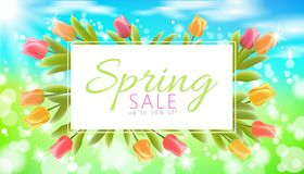 Realistic 3d spring sale script lettering web banner template. Color tulip flowers grass blue sky blue background flyer. Frame promotional square social poster Royalty Free Stock Image