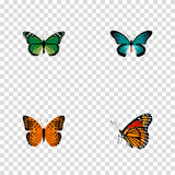 Realistic Danaus Plexippus, Pipevine, Milkweed And Other Vector Elements. Set Of Butterfly Realistic Symbols Also vector illustration