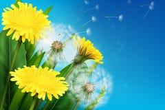 Realistic Dandelion Illustration Royalty Free Stock Image