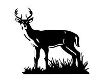 Realistic deer vector Royalty Free Stock Photo