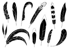 Realistic detailed feathers set, hand drawn vector illustration, black ink graphic isolated on white . Art decorative royalty free illustration