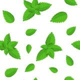 Realistic Detailed Fresh Green Mint Leaves Seamless Pattern Background. Vector. Realistic Detailed Fresh Green Mint or Spearmint Leaves Seamless Pattern Royalty Free Stock Images