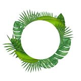 Realistic Detailed Green Leaves of Plants. Vector Royalty Free Stock Photo