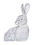 Realistic drawing of gray mother rabbit and her baby hand-drawn Royalty Free Stock Image