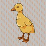 Realistic duckling side view Stock Photography