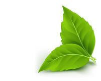 Realistic Eco Friendly Leaves Royalty Free Stock Image