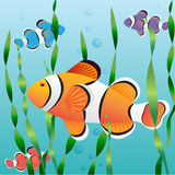 Realistic exotic colorful fish Stock Images