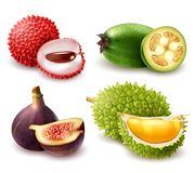 Realistic Exotic Fruits Set. Set of realistic exotic fruits including lychee, feijoa, fig and durian isolated 3d vector illustration Royalty Free Stock Images
