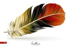 Realistic feathers -  illustration.  on white background vector illustration