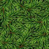 Realistic Fir Branches Background, Christmas Tree, Pine. Vector Illustration. EPS10 Stock Photos