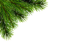 Realistic fir branches. Super realistic fir branches. The background with the effect of unfocus. Vector illustration Royalty Free Stock Photo