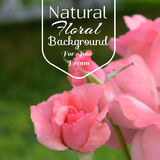Realistic floral background Royalty Free Stock Images