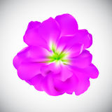 Realistic Flower High Quality Vector Illustration Royalty Free Stock Image