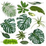 Realistic full color tropical leaves. Vector illustration Royalty Free Stock Photos