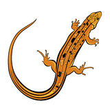 Realistic gecko lizard Royalty Free Stock Photos
