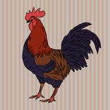 Realistic gorgeous rooster side view. Vector illustration of realistic rooster on striped background Stock Photo