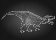 Realistic graphic dinosaur. Graphic Tyrannosaurus Rex. Vector dinosaur isolated on the chalkboard. Animal of the prehistoric period in engraving technique Stock Photos