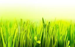 Realistic grass environmental illustration Royalty Free Stock Image