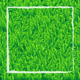 Realistic green grass background with white rectangle vector des Stock Images