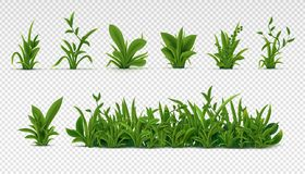 Realistic green grass. 3D fresh spring plants, different herbs and bushes for posters and advertisement. Vector set