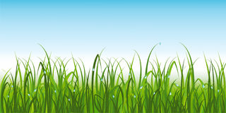Realistic  green grass with dew. Lush green grass in summer with dew Stock Images