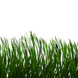Realistic Green Grass Field Stock Photos