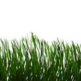 Realistic Green Grass Field stock photos