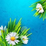 Spring meadow artistic background Stock Photography