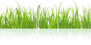 Realistic  green grass isolated on white Royalty Free Stock Photo