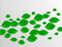 Realistic green leaves abstract background. Ecology concept. Vec Stock Image