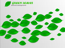 Realistic green leaves abstract background. Ecology concept. Vec. Beautiful green realistic leaves abstract background. Ecology concept. Vector illustration Stock Photos