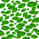 Realistic green leaves isolated texture seamless pattern on whit Stock Photos