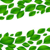 Realistic green leaves isolated texture on white background Royalty Free Stock Image