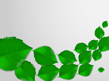 Realistic Green Leaves, Vector Illustration Background. Stock Photography