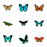 Realistic Green Peacock, Pipevine, Monarch And Other Vector Elements. Set Of Beauty Realistic Symbols  Royalty Free Stock Images