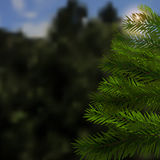 Realistic green spruce. Beautiful, natural background. Sunset in the mountains.. Fir tree - a symbol of Christmas and New Year. Vector illustration Stock Images