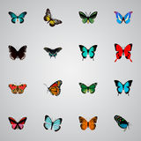 Realistic Hairstreak, Summer Insect, Copper And Other Vector Elements. Set Of Beauty Realistic Symbols Also Includes Royalty Free Stock Image