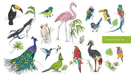 Realistic hand drawn colorful collection of beautiful exotic tropical birds with palm leaves. Flamingos, cockatoo. Flamingos, cockatoo, hummingbird, toucan Stock Photography