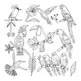 Tropical bird, illustration, vector Stock Photo