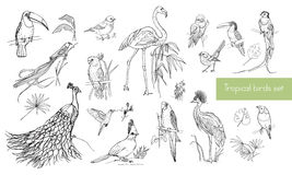 Realistic hand drawn contour collection of beautiful exotic tropical birds with palm leaves. Flamingos, cockatoo. Realistic hand drawn contour collection of vector illustration