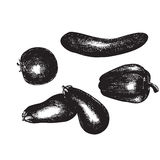 Realistic hand drawn vegetables, set of fresh healthy organic food Royalty Free Stock Images