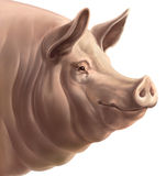 Realistic head of pig Stock Photo