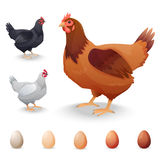Realistic Hens in different breeds and eggs Royalty Free Stock Photos