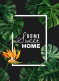 Realistic House Plant Frame Background stock illustration